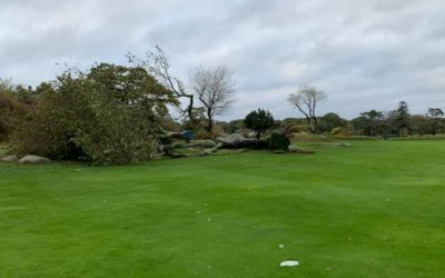 For over 50 years this tree blocked members shots into the 9th green at Rockport Golf Club. Looks like the hole just got a little easier……..⛳️